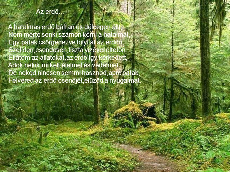 Az erdő... A hatalmas erdő bátran és délcegen állt, Nem merte senki számon kérni a hatalmát, Egy patak csörgedezve folyt át az erdőn,
