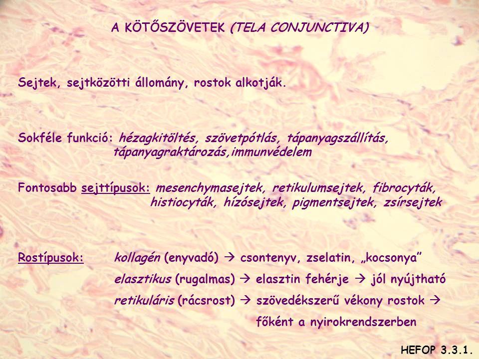 A KÖTŐSZÖVETEK (TELA CONJUNCTIVA)
