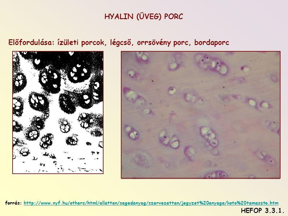 Előfordulása: ízületi porcok, légcső, orrsövény porc, bordaporc