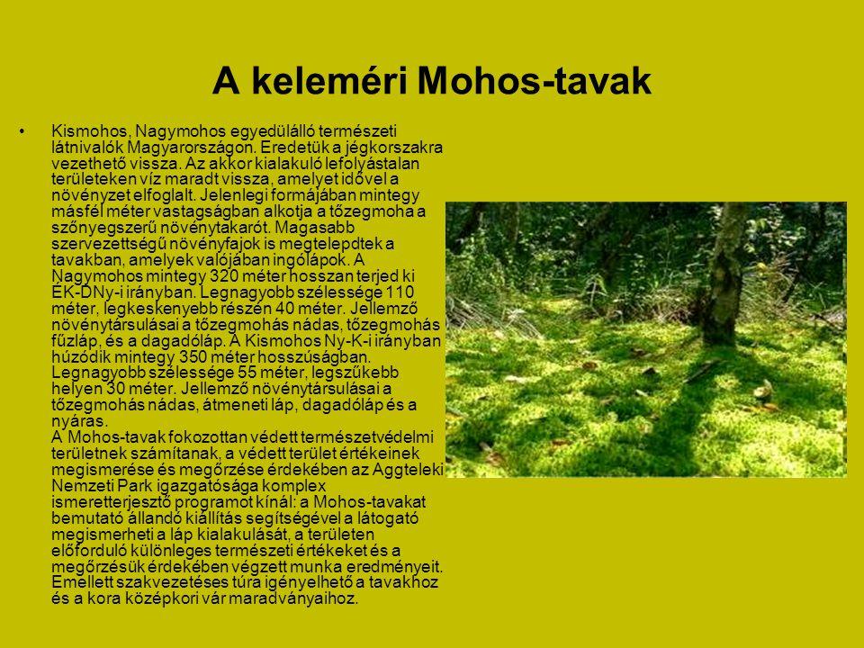 A keleméri Mohos-tavak