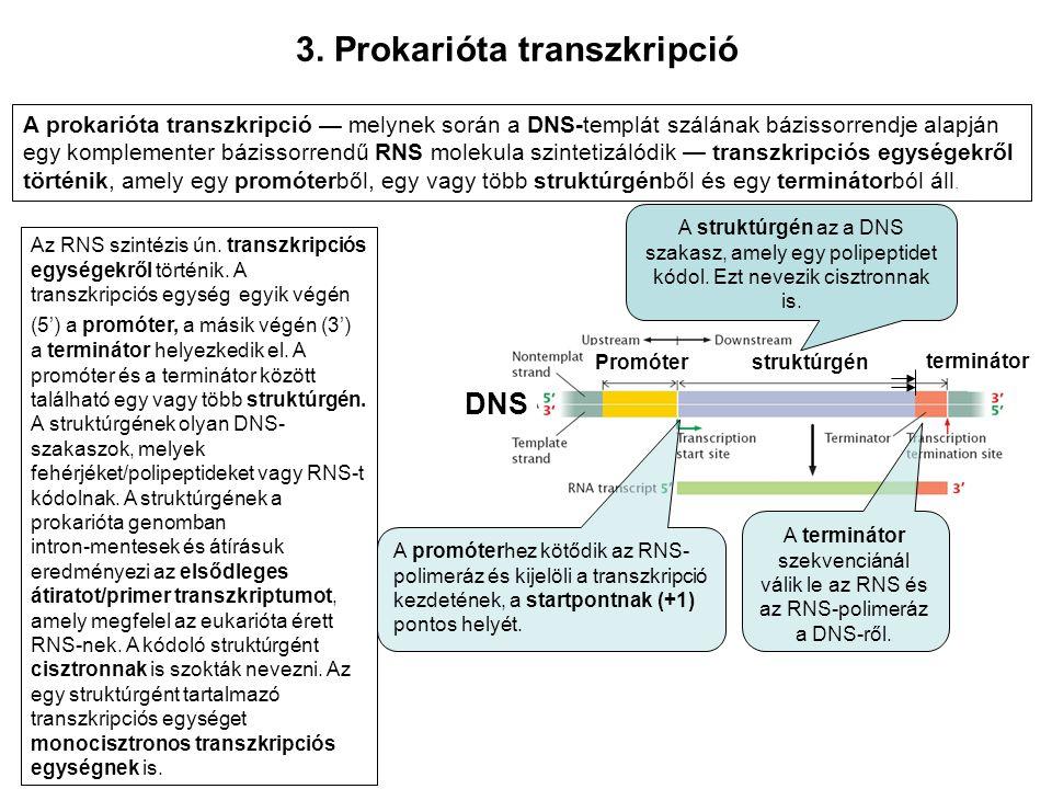 3. Prokarióta transzkripció