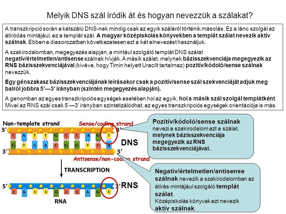 Melyik DNS szál íródik át és hogyan nevezzük a szálakat