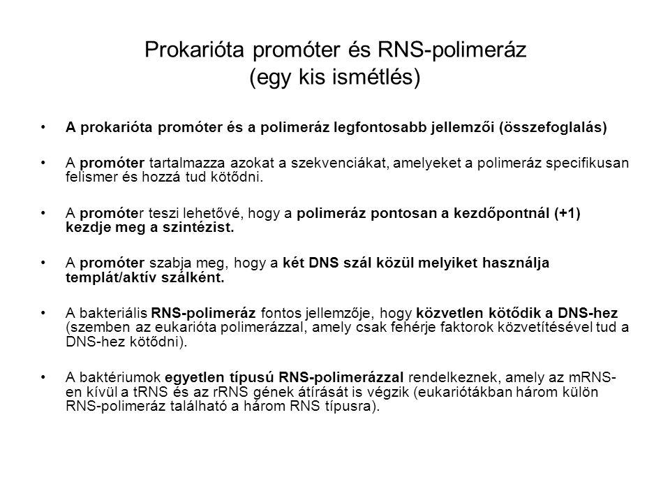 Prokarióta promóter és RNS-polimeráz (egy kis ismétlés)