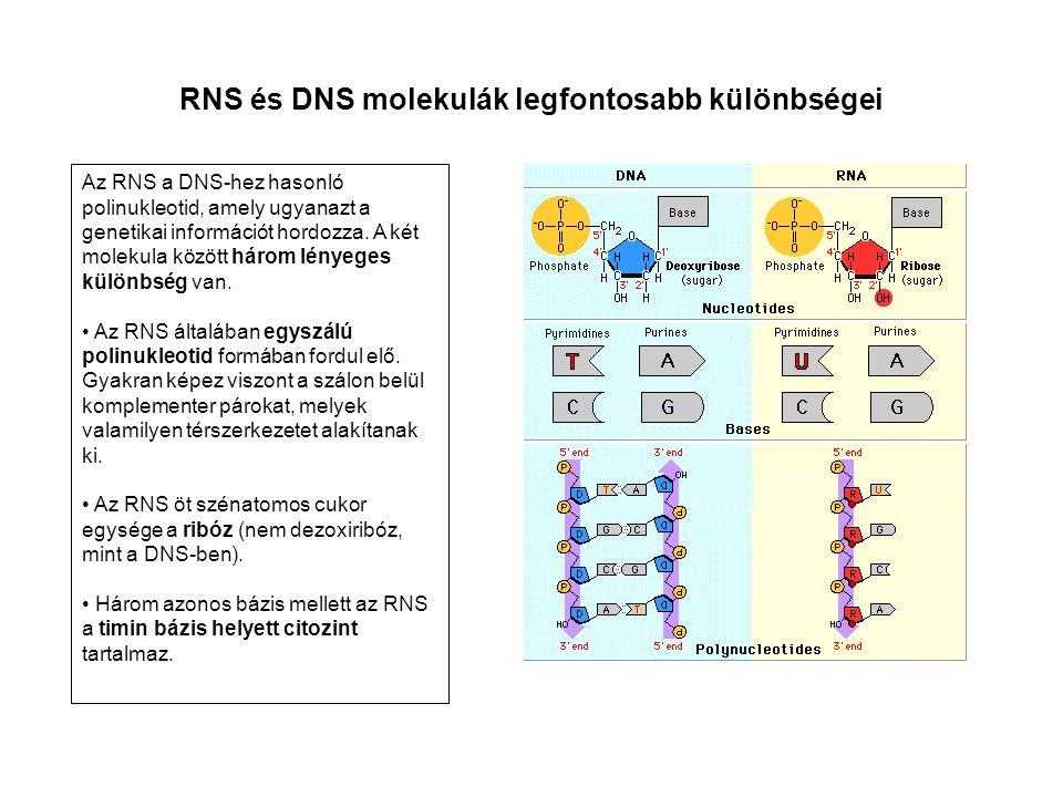 RNS és DNS molekulák legfontosabb különbségei