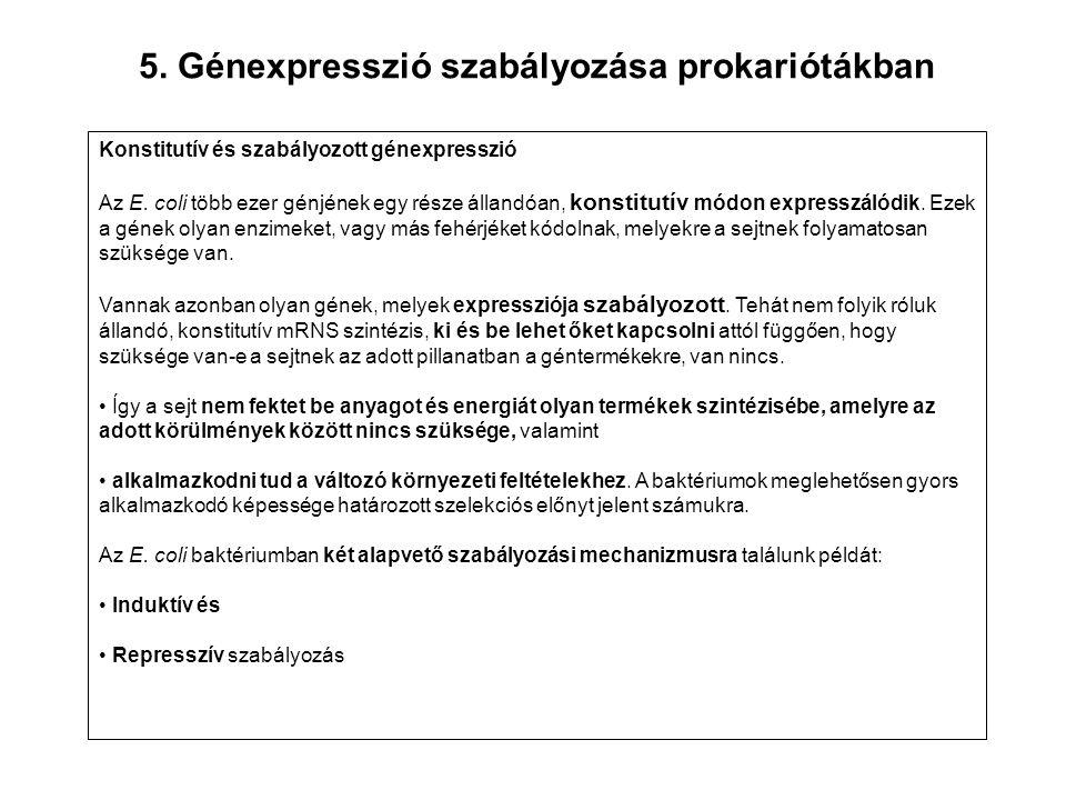 5. Génexpresszió szabályozása prokariótákban