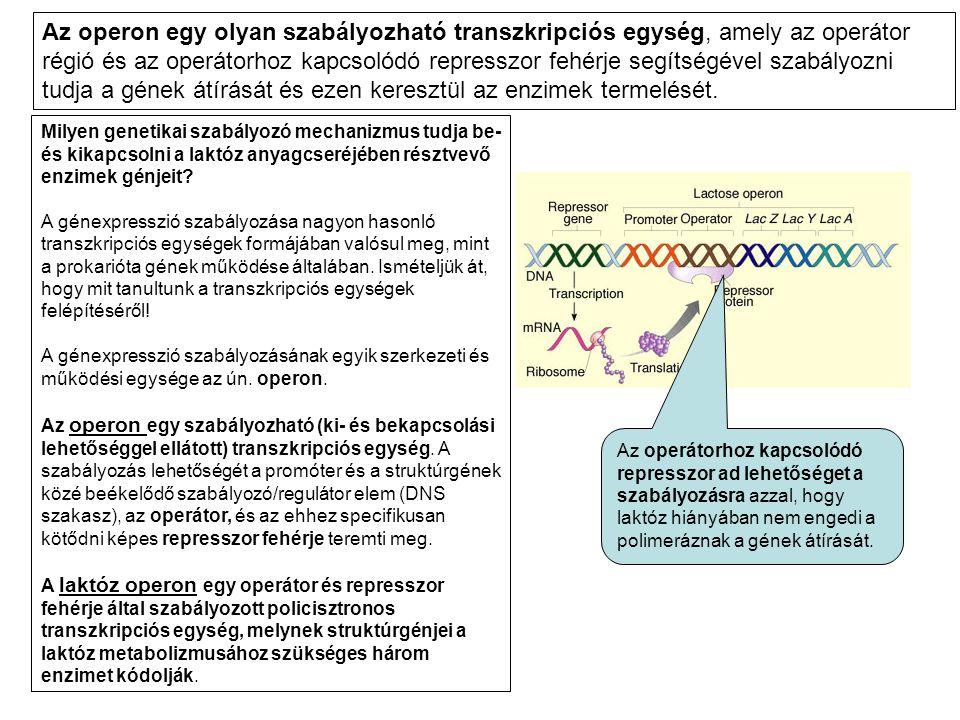 Az operon egy olyan szabályozható transzkripciós egység, amely az operátor régió és az operátorhoz kapcsolódó represszor fehérje segítségével szabályozni tudja a gének átírását és ezen keresztül az enzimek termelését.
