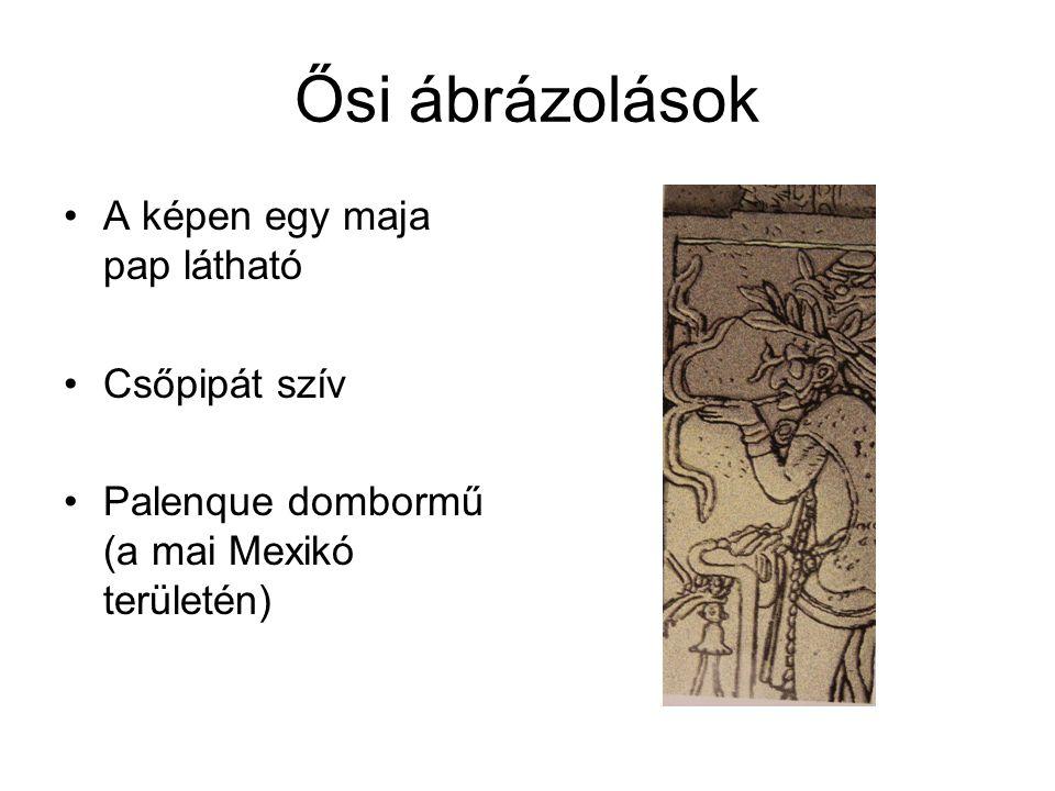 Ősi ábrázolások A képen egy maja pap látható Csőpipát szív
