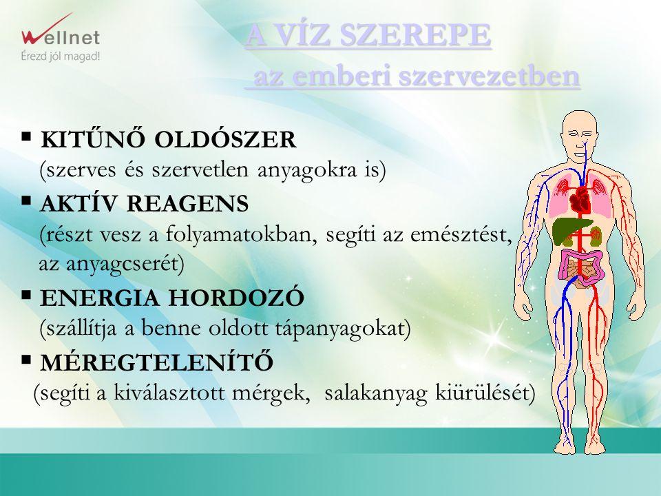 A VÍZ SZEREPE az emberi szervezetben