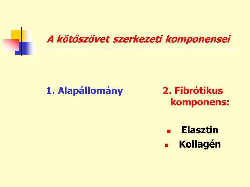 A kötőszövet szerkezeti komponensei