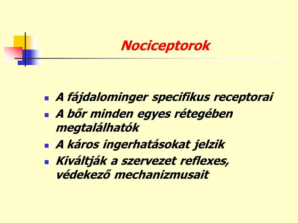 Nociceptorok A fájdalominger specifikus receptorai