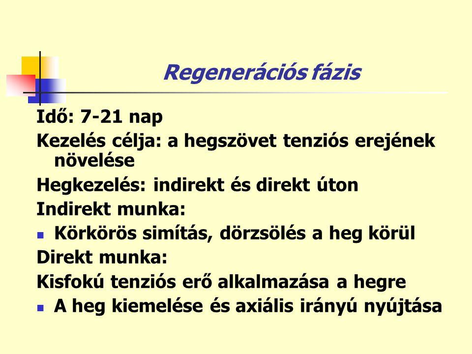 Regenerációs fázis Idő: 7-21 nap