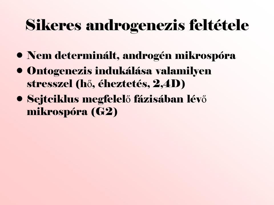 Sikeres androgenezis feltétele
