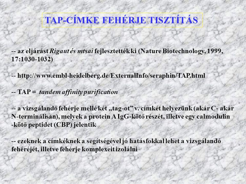 TAP-CÍMKE FEHÉRJE TISZTÍTÁS