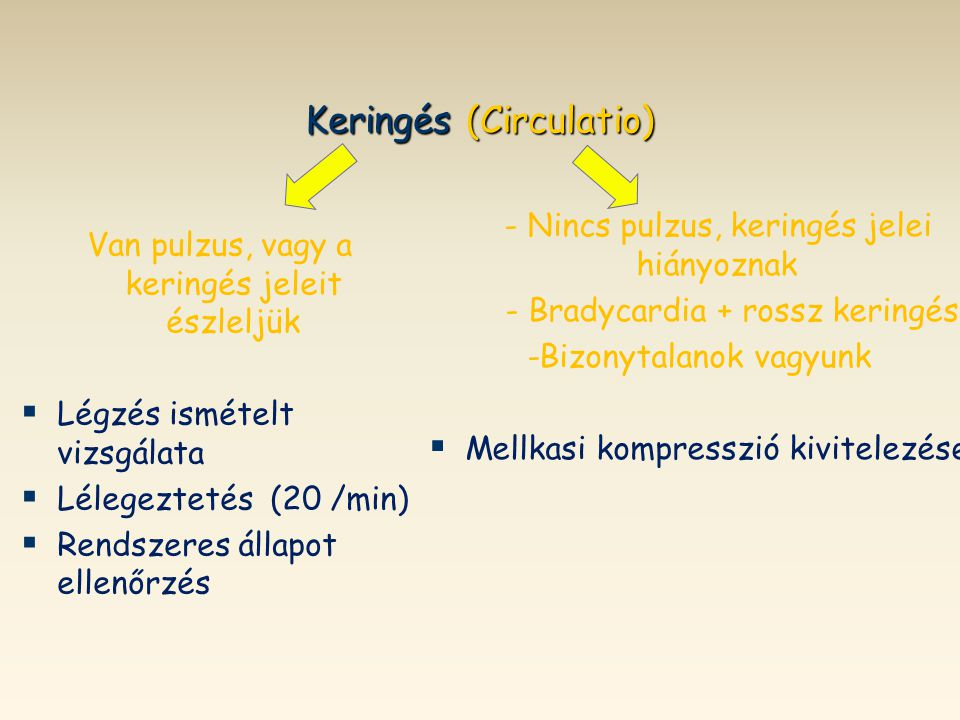 Keringés (Circulatio)