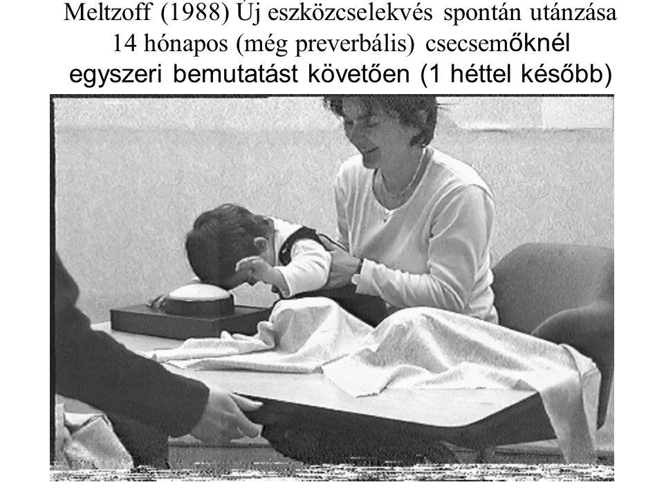 Meltzoff (1988) Új eszközcselekvés spontán utánzása 14 hónapos (még preverbális) csecsemőknél egyszeri bemutatást követően (1 héttel később)