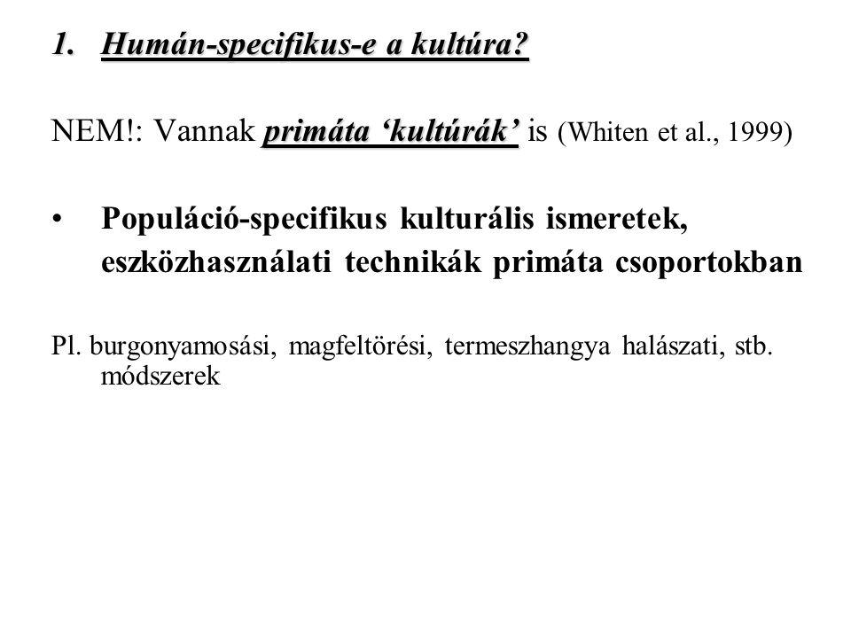 Humán-specifikus-e a kultúra