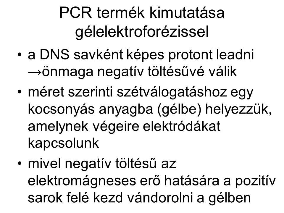 PCR termék kimutatása gélelektroforézissel