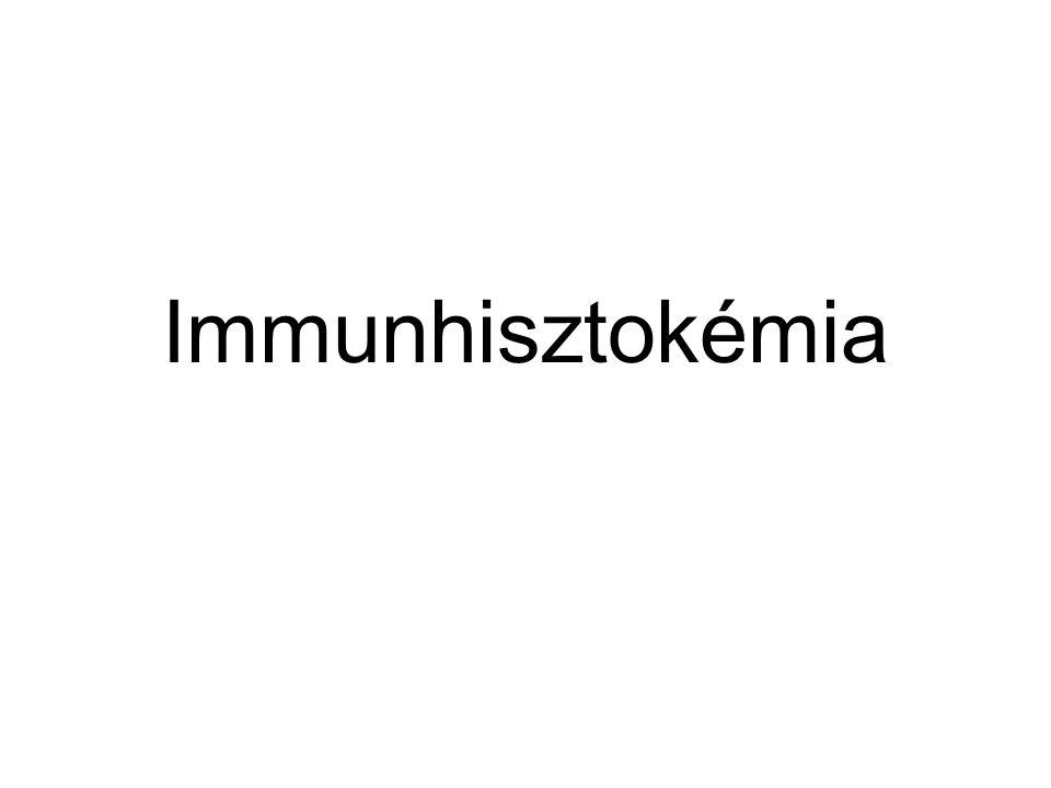 Immunhisztokémia