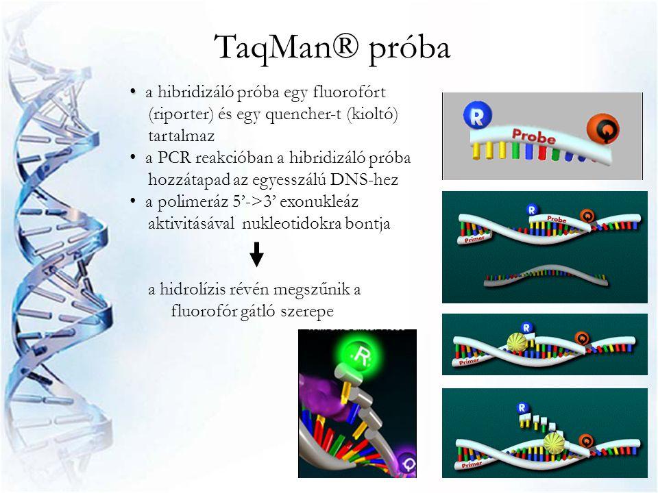 TaqMan® próba a hibridizáló próba egy fluorofórt (riporter) és egy quencher-t (kioltó) tartalmaz.