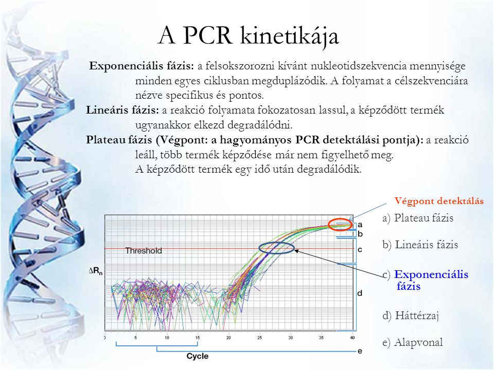 A PCR kinetikája
