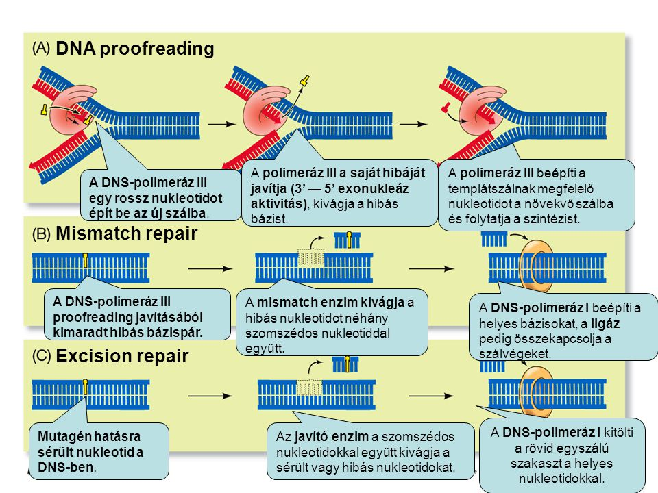 DNA proofreading Mismatch repair Excision repair