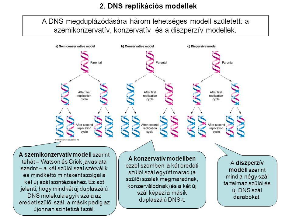 2. DNS replikációs modellek