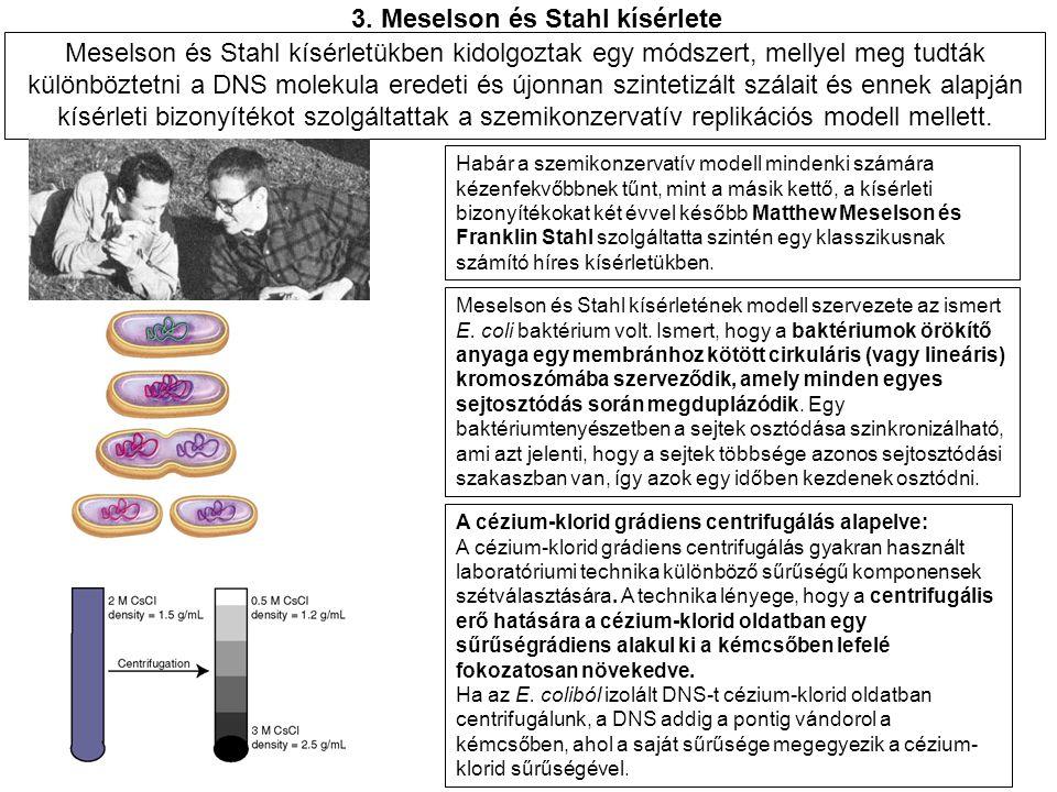 3. Meselson és Stahl kísérlete