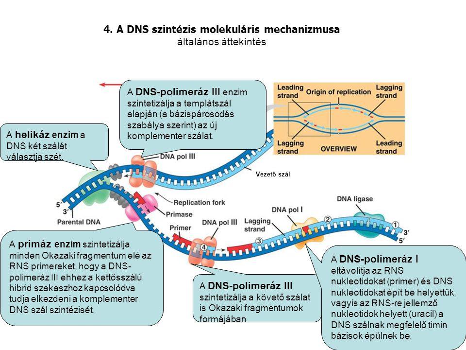 4. A DNS szintézis molekuláris mechanizmusa általános áttekintés