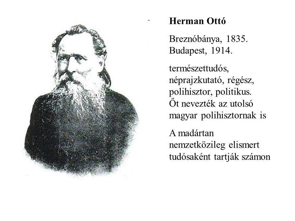 Herman Ottó Breznóbánya, 1835. Budapest, 1914.