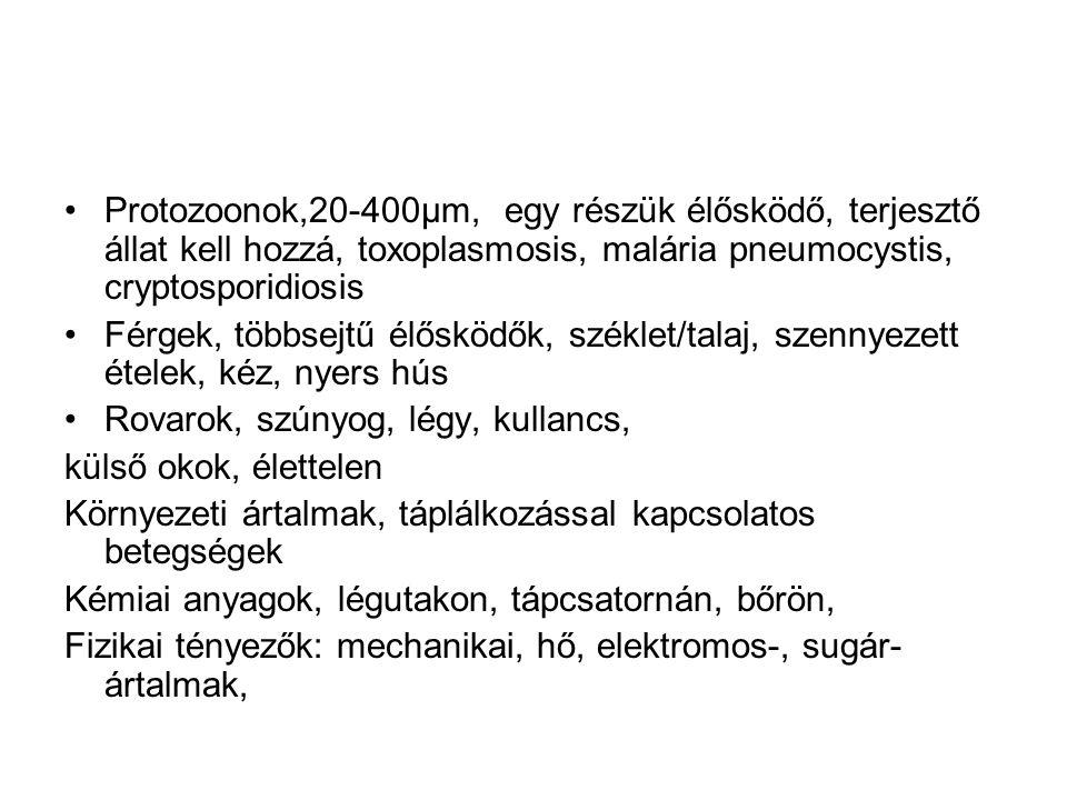 Protozoonok,20-400µm, egy részük élősködő, terjesztő állat kell hozzá, toxoplasmosis, malária pneumocystis, cryptosporidiosis