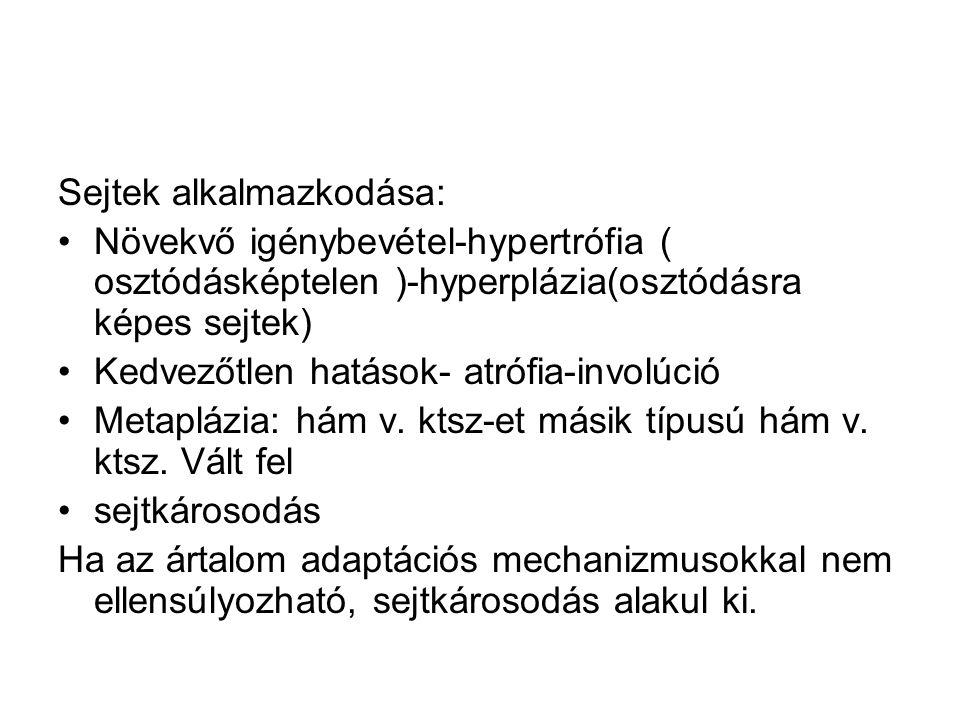 Sejtek alkalmazkodása: