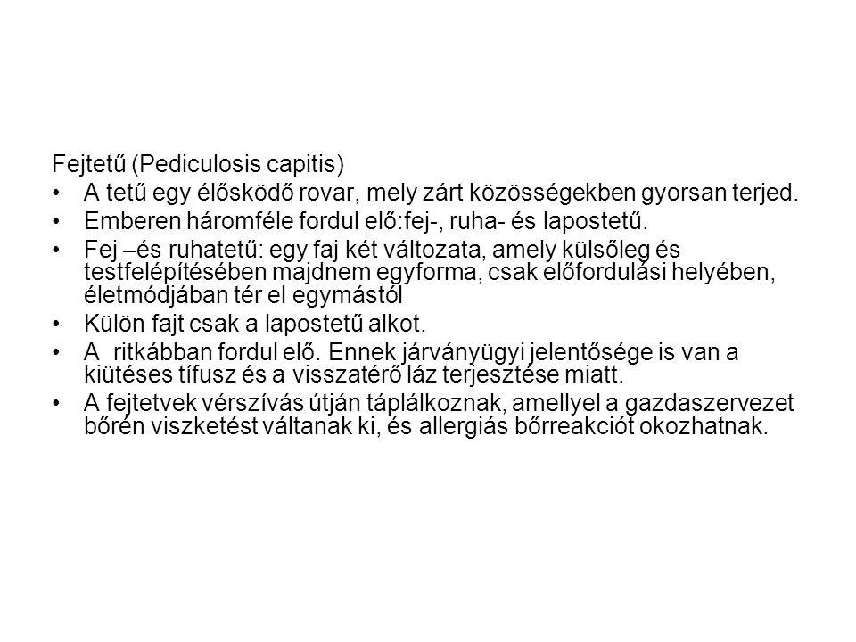 Fejtetű (Pediculosis capitis)