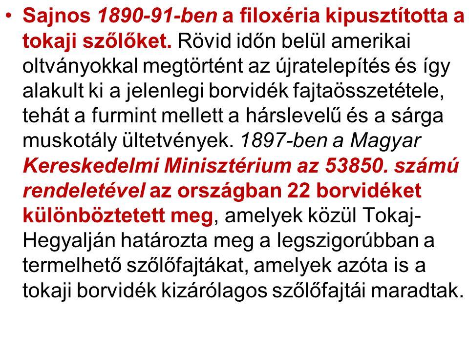 Sajnos 1890-91-ben a filoxéria kipusztította a tokaji szőlőket