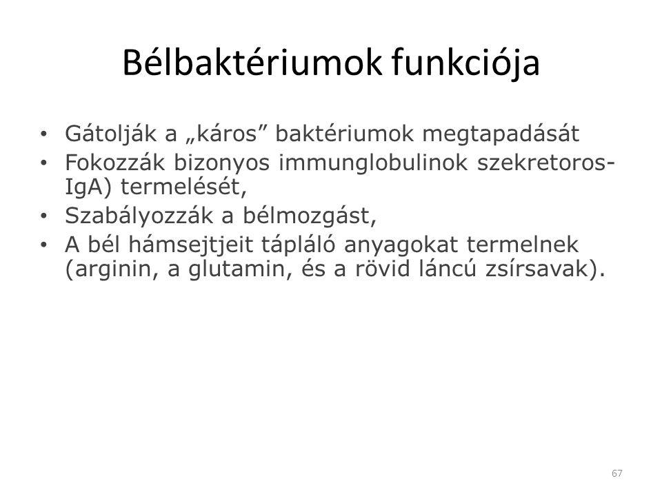 Bélbaktériumok funkciója