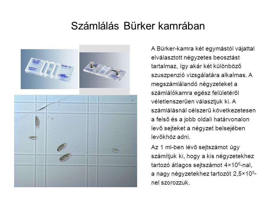 Számlálás Bürker kamrában