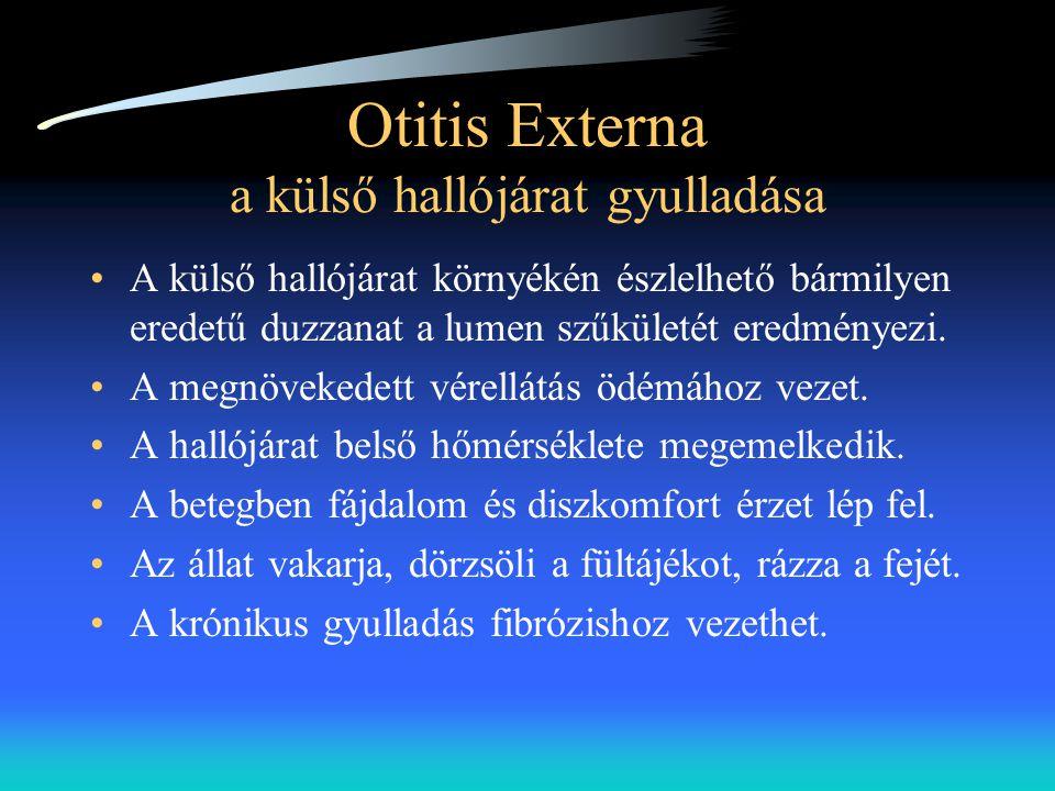 Otitis Externa a külső hallójárat gyulladása