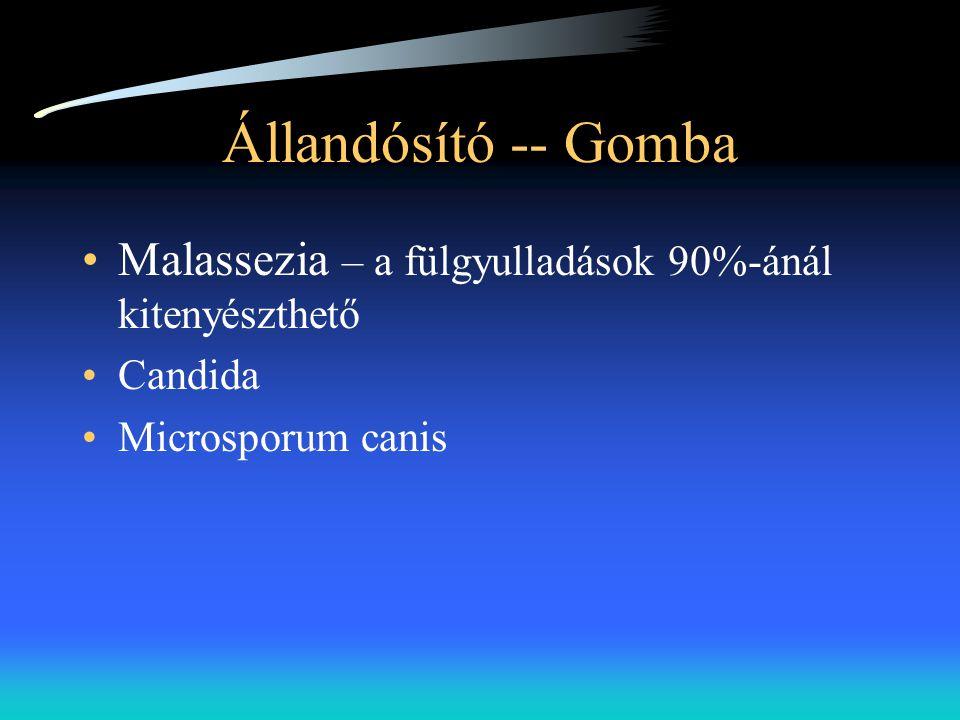 Állandósító -- Gomba Malassezia – a fülgyulladások 90%-ánál kitenyészthető.