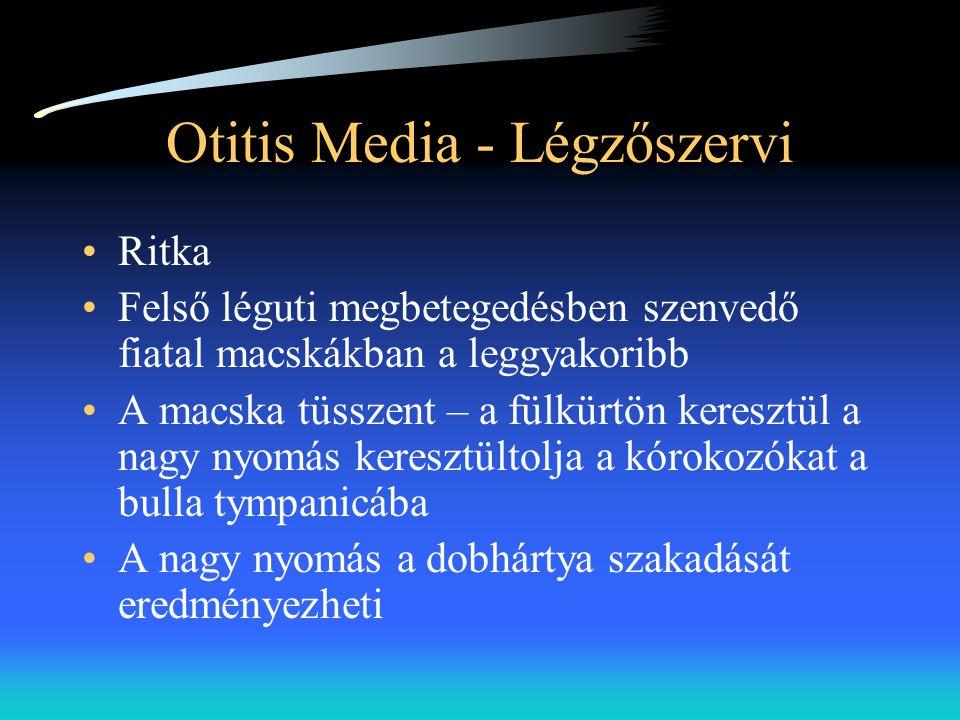 Otitis Media - Légzőszervi