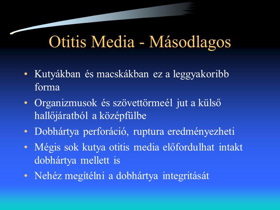 Otitis Media - Másodlagos