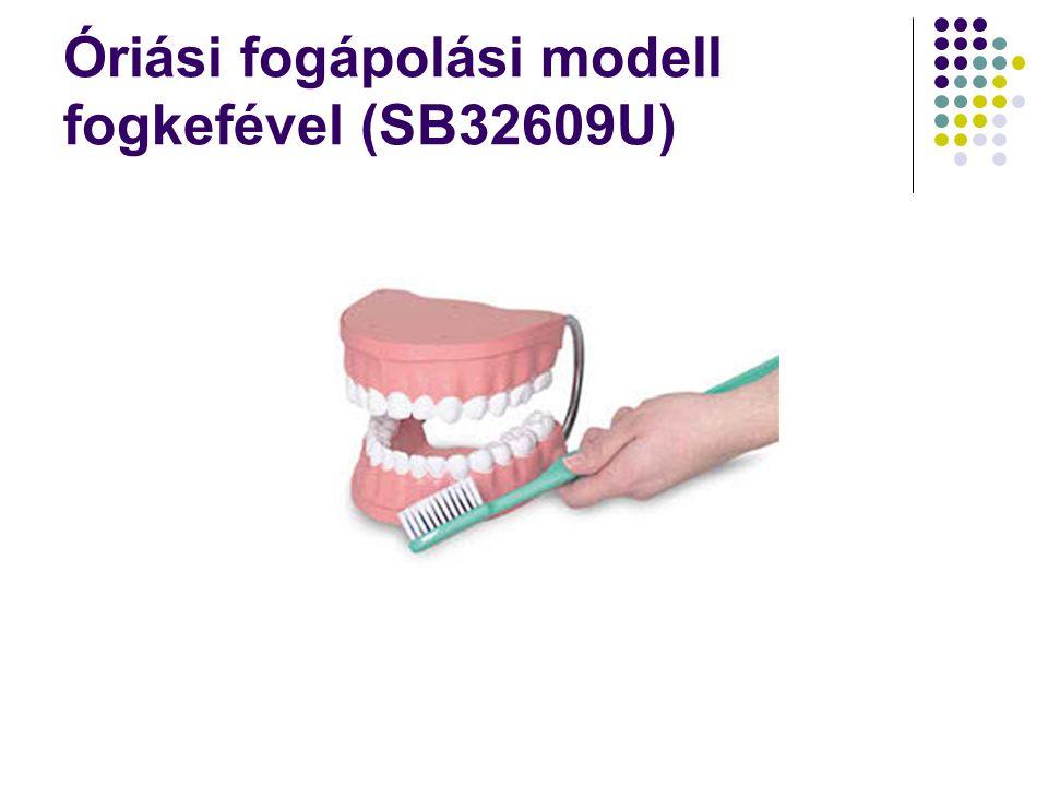 Óriási fogápolási modell fogkefével (SB32609U)