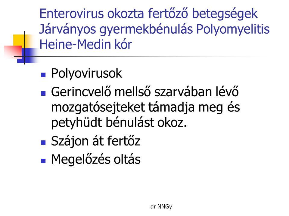 Enterovirus okozta fertőző betegségek Járványos gyermekbénulás Polyomyelitis Heine-Medin kór
