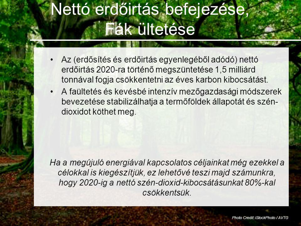 Nettó erdőirtás befejezése, Fák ültetése