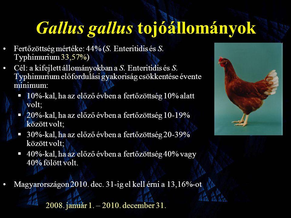 Gallus gallus tojóállományok