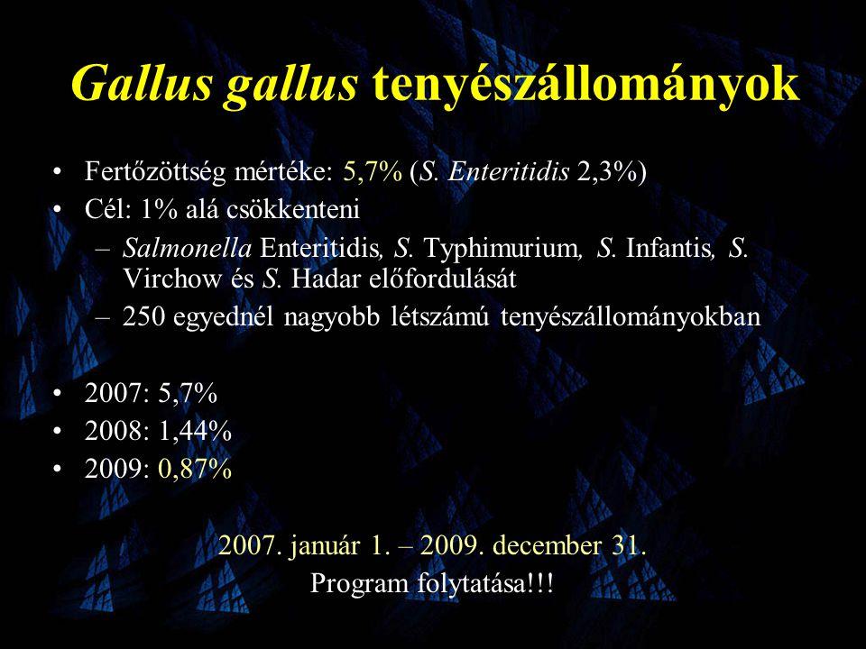 Gallus gallus tenyészállományok