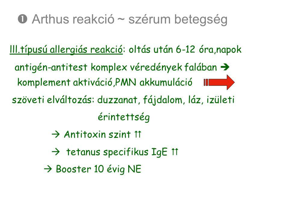  Arthus reakció ~ szérum betegség