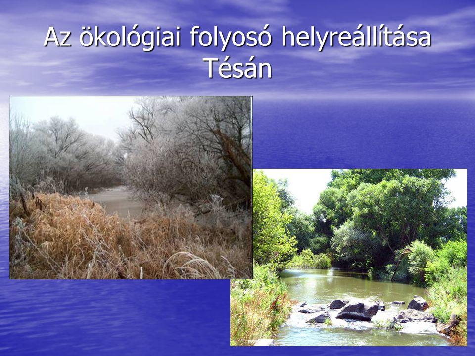 Az ökológiai folyosó helyreállítása Tésán