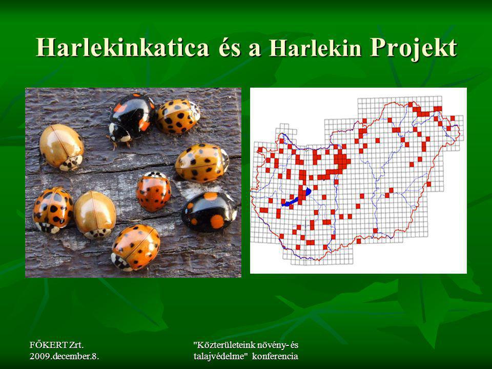 Harlekinkatica és a Harlekin Projekt