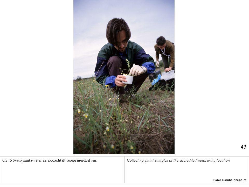 6/2. Növényminta-vétel az akkreditált terepi mérőhelyen.