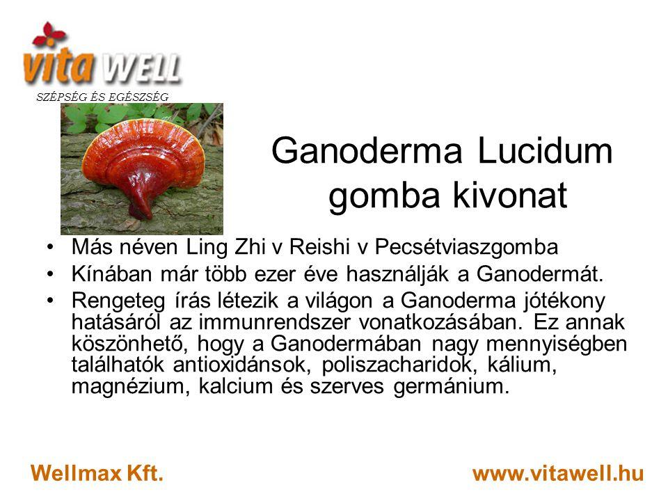 Ganoderma Lucidum gomba kivonat