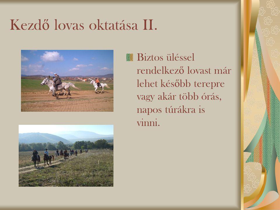 Kezdő lovas oktatása II.